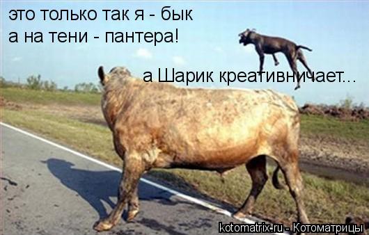 Котоматрица: это только так я - бык а на тени - пантера! а Шарик креативничает...