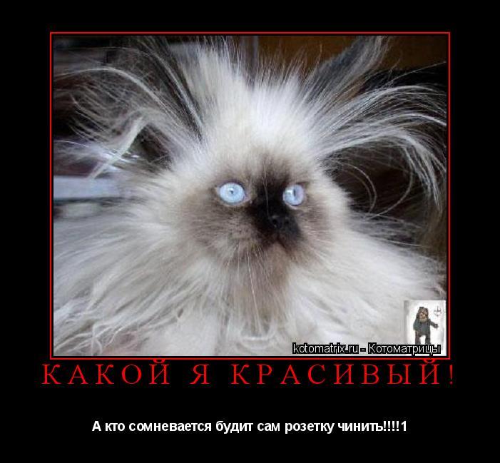 Котоматрица: Какой я красивый! А кто сомневается будит сам розетку чинить!!!!1