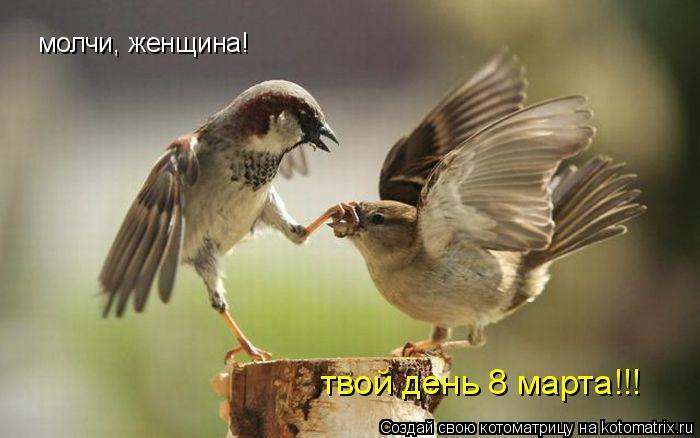 Котоматрица: молчи, женщина!  твой день 8 марта!!!