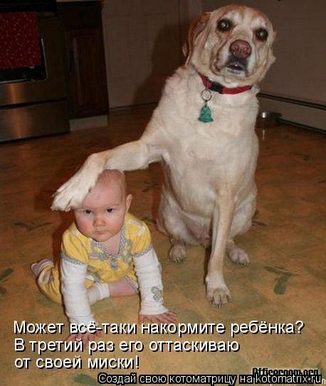 Котоматрица: Может всё-таки накормите ребёнка? В третий раз его оттаскиваю  от своей миски!