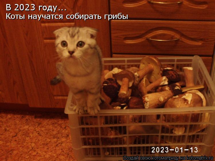 Котоматрица: В 2023 году... Коты научатся собирать грибы