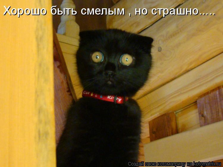 Котоматрица: Хорошо быть смелым , но страшно.....