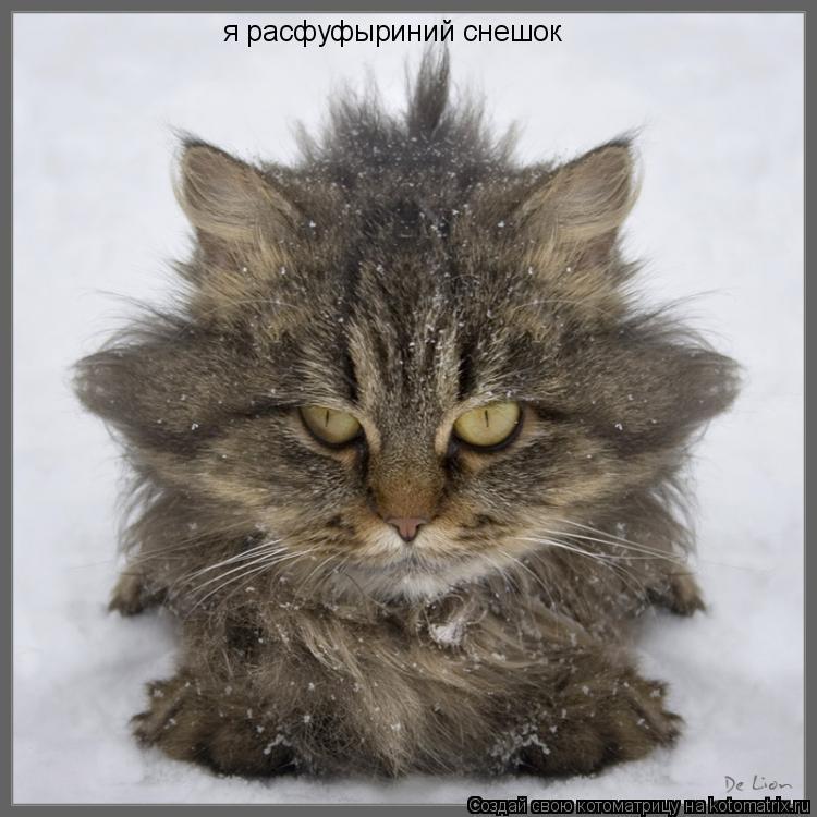 Котоматрица: я расфуфыриний снешок
