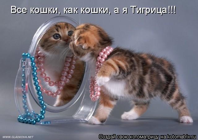 Котоматрица: Все кошки, как кошки, а я Тигрица!!!