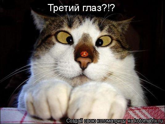 Котоматрица: Третий глаз?!?