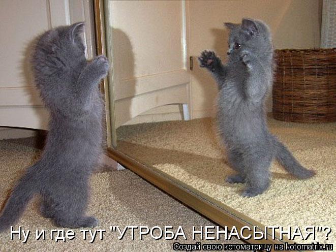 """Котоматрица - Ну и где тут """"УТРОБА НЕНАСЫТНАЯ""""?"""