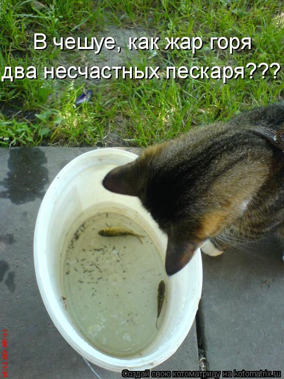 Котоматрица: В чешуе, как жар горя  два несчастных пескаря???