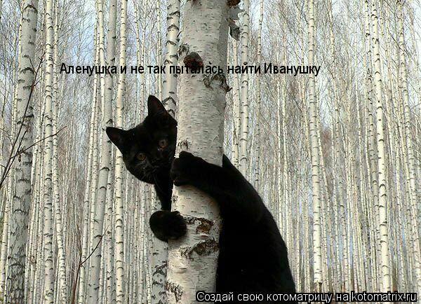 Котоматрица: Аленушка и не так пыталась найти Иванушку