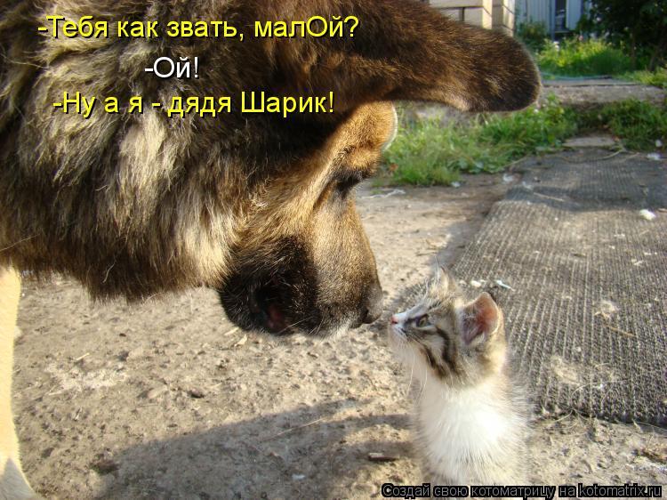 Котоматрица - -Тебя как звать, малОй? -Ой! -Ну а я - дядя Шарик!