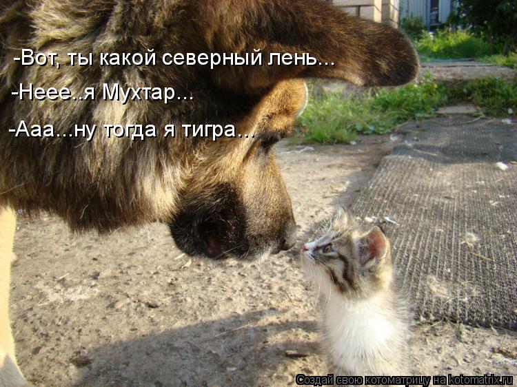 Котоматрица: -Вот, ты какой северный лень...  -Неее..я Мухтар... -Ааа...ну тогда я тигра...