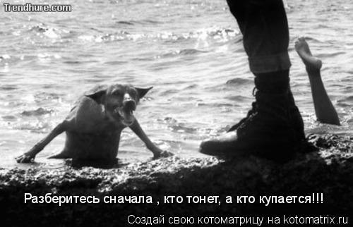 Котоматрица: Разберитесь сначала , кто тонет, а кто купается!!!