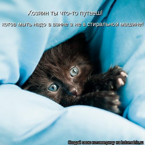 Котоматрица: Хозяин ты что-то путаеш! котов мыть надо в ванне а не в стиральной машине!