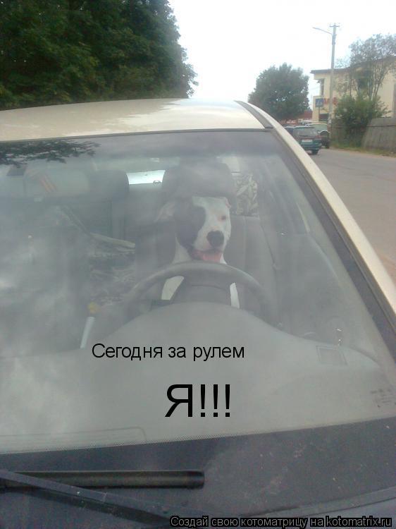 Котоматрица: Сегодня за рулем Я!!!