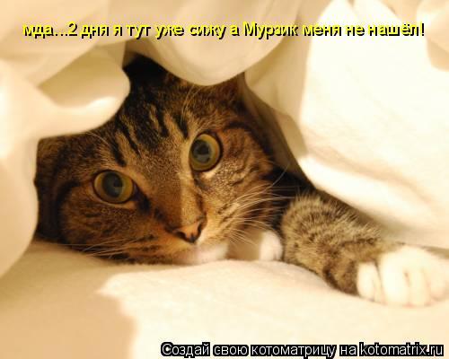 Котоматрица: мда...2 дня я тут уже сижу а Мурзик меня не нашёл!