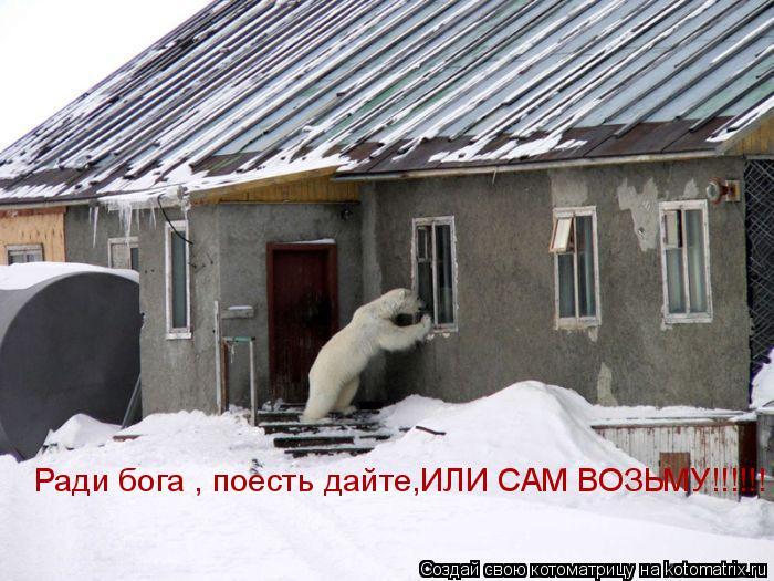Котоматрица: Ради бога , поесть дайте,ИЛИ САМ ВОЗЬМУ!!!!!!