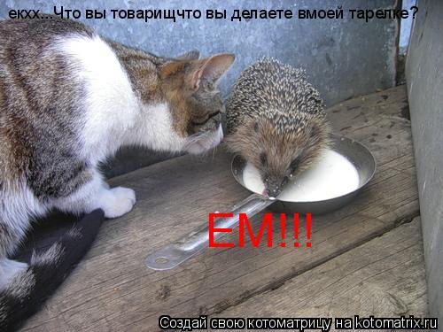 Котоматрица: екхх...Что вы товарищчто вы делаете вмоей тарелке? ЕМ!!!