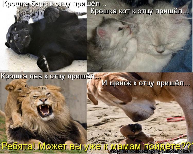 Котоматрица - Крошка барс к отцу пришёл... Крошка кот к отцу пришёл... Крошка лев к