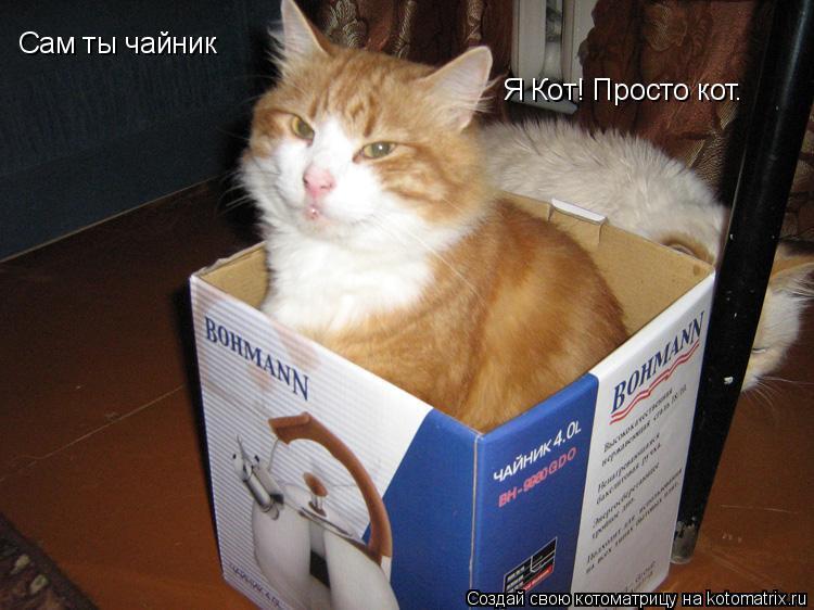 Котоматрица: Сам ты чайник Я Кот! Просто кот.