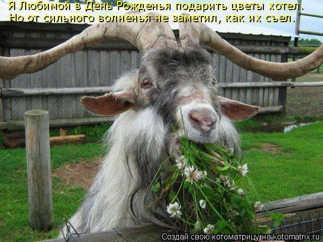 Котоматрица: Я Любимой в День Рожденья подарить цветы хотел. Но от сильного волненья не заметил, как их съел.