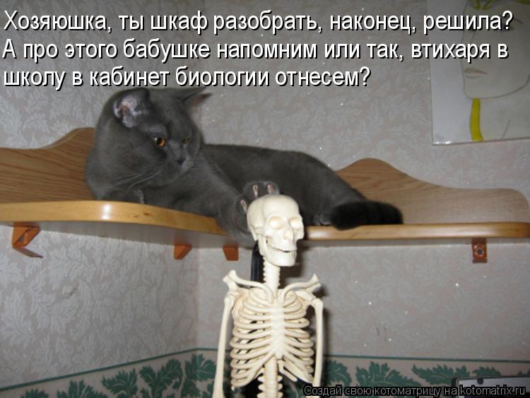 Котоматрица - Хозяюшка, ты шкаф разобрать, наконец, решила? А про этого бабушке напо