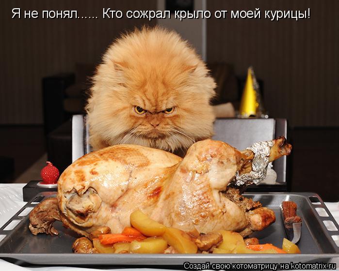 Котоматрица: Я не понял...... Кто сожрал крыло от моей курицы!