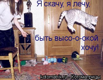 Котоматрица: Я скачу, я лечу, быть высо-о-окой хочу!