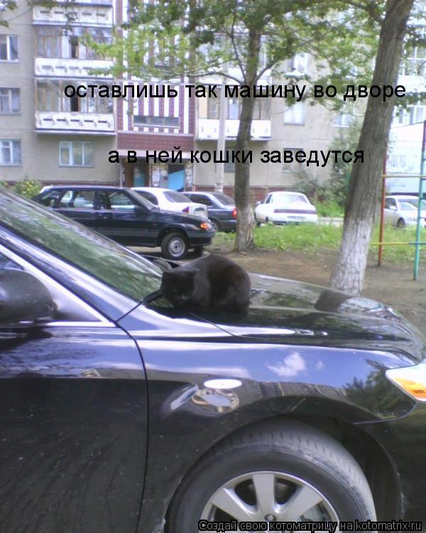 Котоматрица: оставлишь так машину во дворе а в ней кошки заведутся