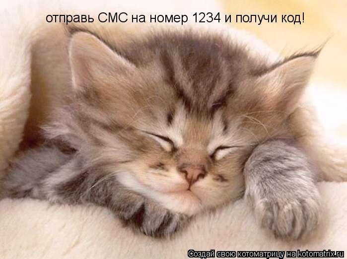Котоматрица: отправь СМС на номер 1234 и получи код!