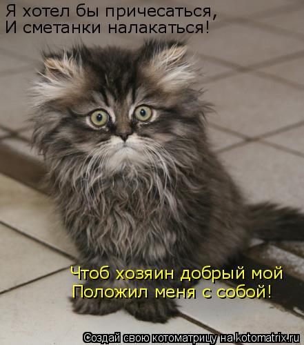 Котоматрица: Я хотел бы причесаться, И сметанки налакаться! Чтоб хозяин добрый мой Положил меня с собой!