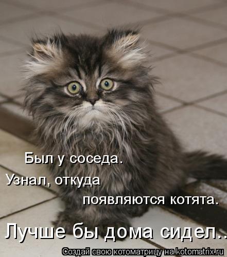 Котоматрица: Был у соседа. Узнал, откуда  появляются котята. Лучше бы дома сидел...