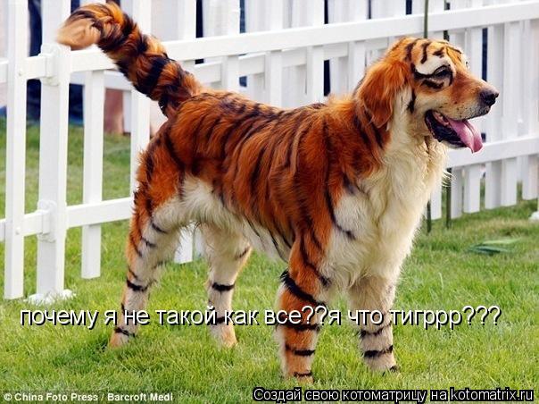 Котоматрица: почему я не такой как все??я что тигррр???