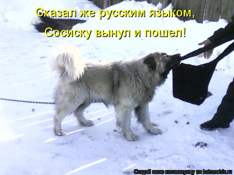 Котоматрица: Сказал же русским языком, Сосиску вынул и пошел!