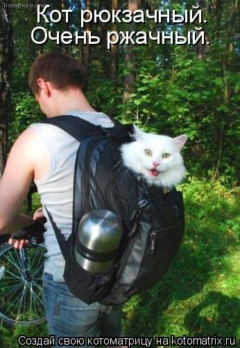 Котоматрица: Кот рюкзачный. Очень ржачный.