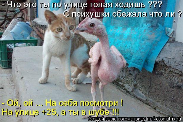 Котоматрица: - Ой, ой ... На себя посмотри ! На улице +25, а ты в шубе !!! - Что это ты по улице голая ходишь ??? С психушки сбежала что ли ?