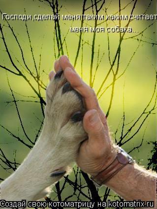 Котоматрица: Господи,сделай меня таким каким считает  меня моя собака...