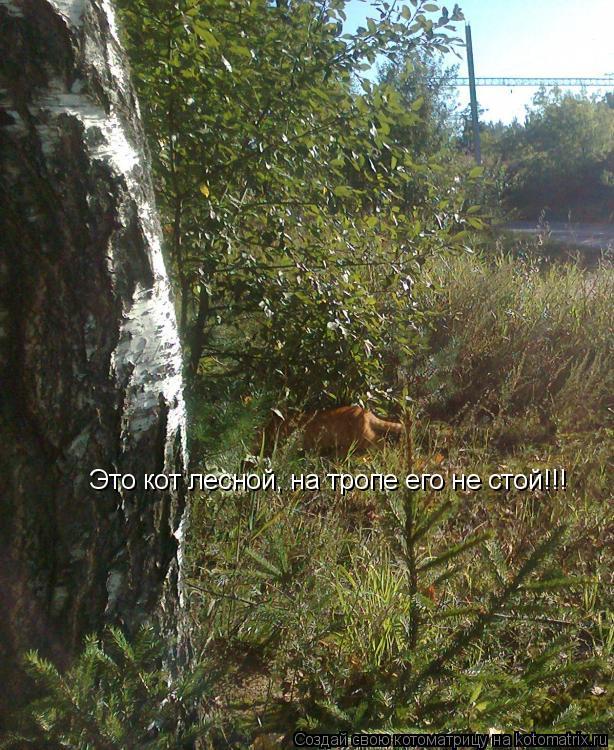 Котоматрица: Это кот лесной, на тропе его не стой!!!