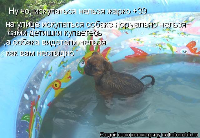 Котоматрица: Ну чо, искупаться нельзя жарко +39 на улице искупаться собаке нормально нельзя сами детишки купаетесь  ,а собака видетели нельзя как вам нест