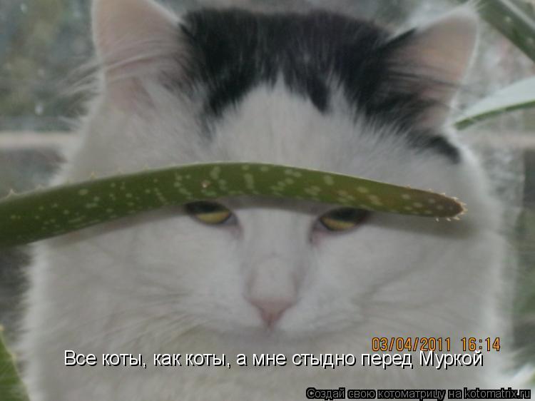 Котоматрица: Все коты, как коты, а мне стыдно перед Муркой