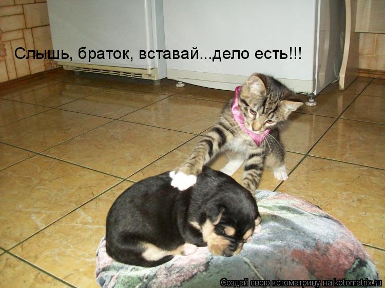 Котоматрица: Слышь, браток, вставай...дело есть!!!