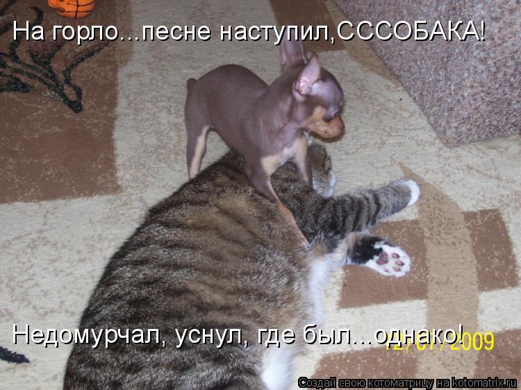 Котоматрица - На горло...песне наступил,СССОБАКА! Недомурчал, уснул, где был...однак