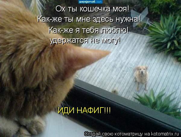 Котоматрица: Ох ты кошечка моя! Как-же ты мне здесь нужна! Как-же я тебя люблю! удержатся не могу! ИДИ НАФИГ!!!