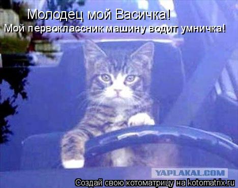 Котоматрица: Молодец мой Васичка! Мой первоклассник машину водит умничка!