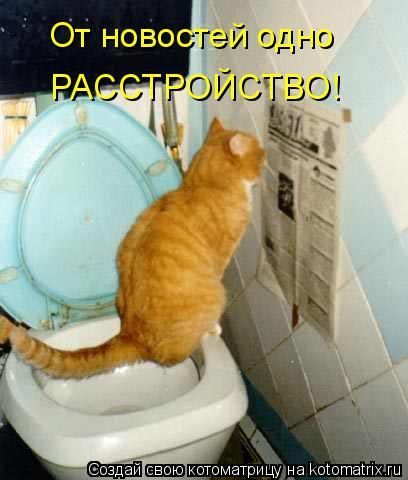 Котоматрица - От новостей одно РАССТРОЙСТВО!