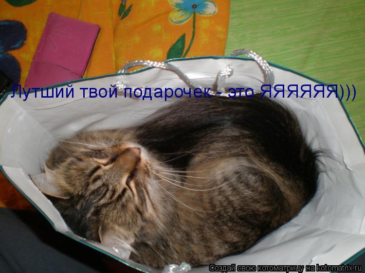 Котоматрица: Лутший твой подарочек - это ЯЯЯЯЯЯ)))