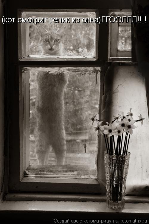 Котоматрица: (кот смотрит телик из окна)ГГООЛЛЛ!!!!