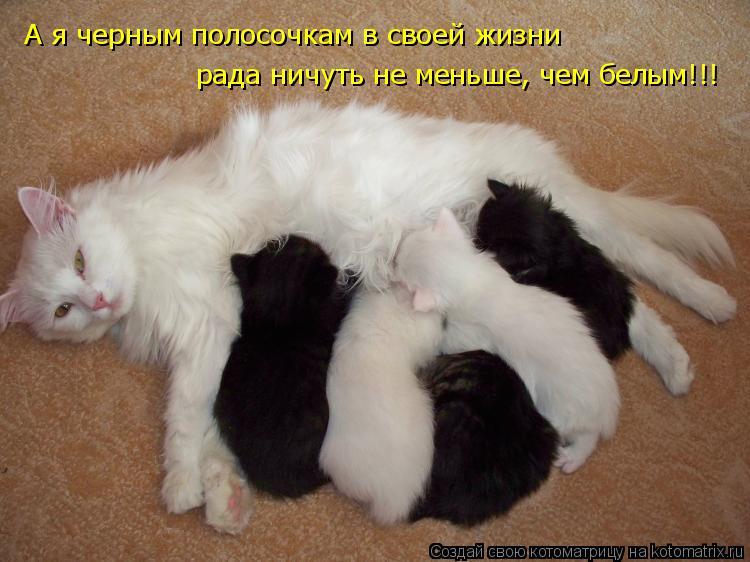 Котоматрица - А я черным полосочкам в своей жизни рада ничуть не меньше, чем белым!!