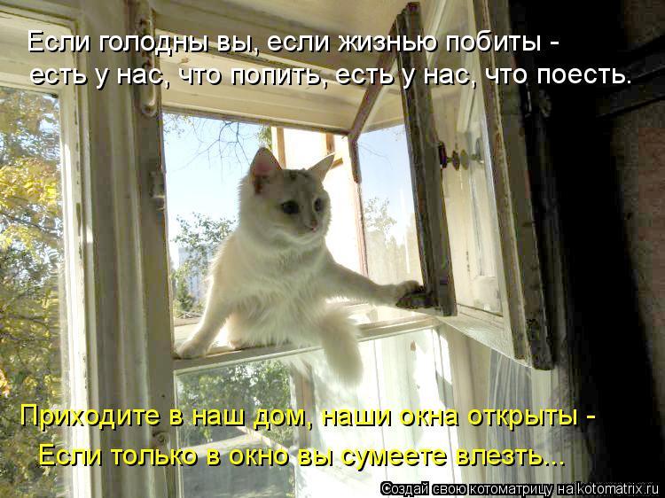Котоматрица - Приходите в наш дом, наши окна открыты -   Если только в окно вы сумее