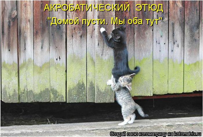 """Котоматрица - АКРОБАТИЧЕСКИЙ  ЭТЮД """"Домой пусти. Мы оба тут"""""""