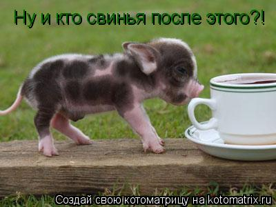 Котоматрица: Ну и кто свинья после этого?!