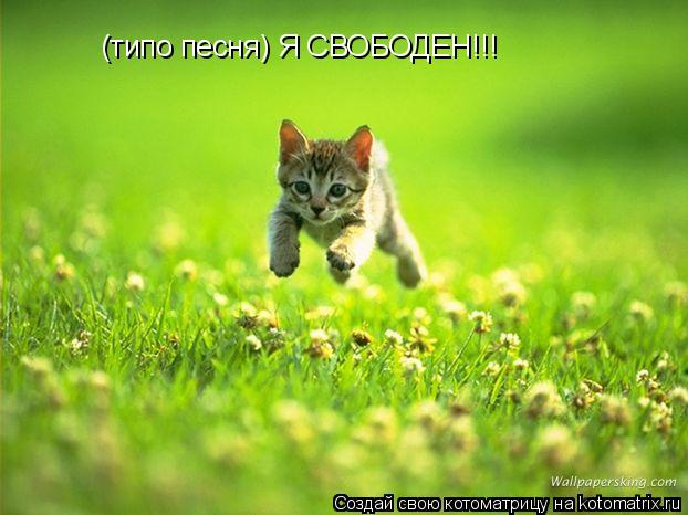 Котоматрица: (типо песня) Я СВОБОДЕН!!!